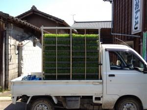 今回の田植えで使用する苗代を積んだトラック