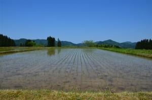 田植えの済みで水の張られた田んぼ