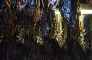 ズラリと並ぶ『鮭の塩引き』