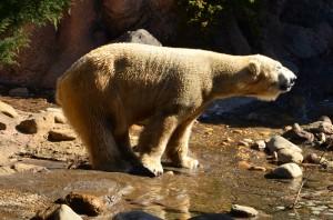 よこはま動物園ズーラシアの感想