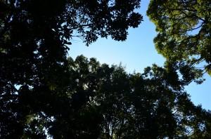 ズーラシアは緑が豊富でとても気持ち良い