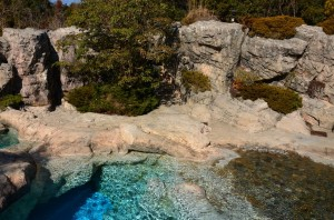 ペンギンが泳いでいる水槽を上から見たところ