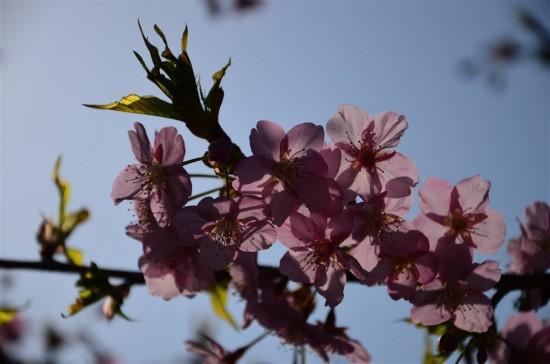 見た目は暗いけど花びらが光を通していて綺麗。