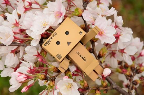 ダンボー、桜のベッドにご満悦