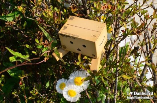 ダンボー、生垣の中に花を見つける
