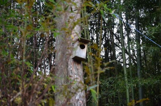 樹木にはこの様にムササビ用の巣箱が設置されています