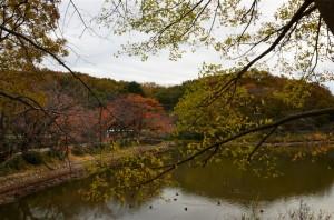 この池は『下の池』と呼ばれている池