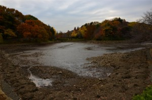 そしてこの池が『中の池』・・・なのに池の水が空っぽ・・・
