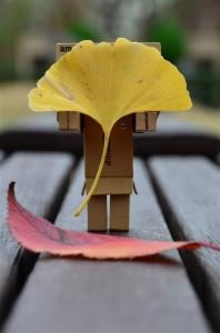 銀杏の葉とダンボー