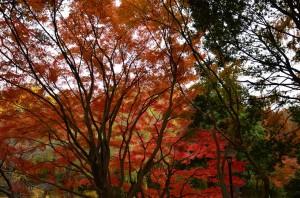 [横浜] 三ツ池公園の紅葉(2012年)