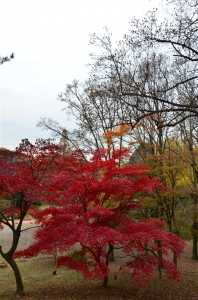 上の紅葉を引いて撮影