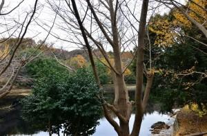 この池は『上の池』と呼ばれている池