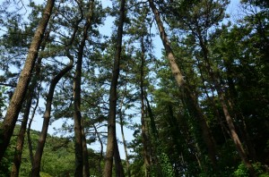 三渓園・外苑付近の木々